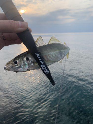 2021.5.15 様々な魚種の中からアジを選択! (新潟県柏崎 アジング)